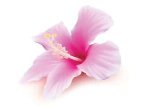 Swedish Flower